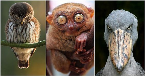23 Freakishly Cute Animals Who Are Carefully Plotting Your Death
