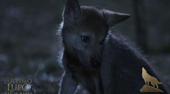 frasi lupi - Cerca con Google