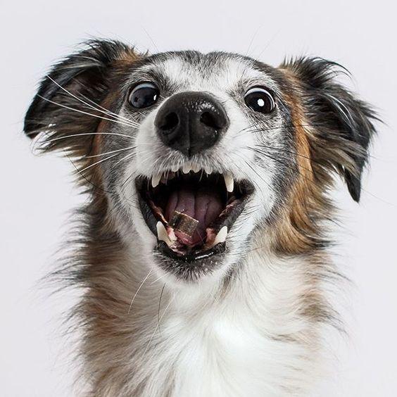 Pin Von Sabina B Auf Silken Windsprite In 2020 Hundetricks Hunde Welpen