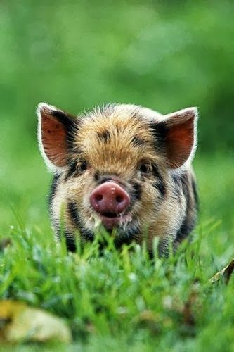 ~~Piglet on grass by Stuart & Michele Westmorland~~