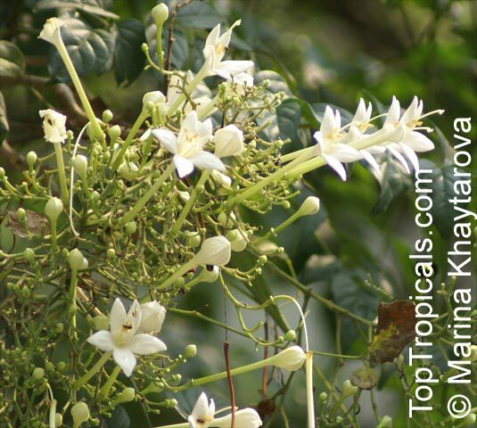 Pin On Indian Flowers