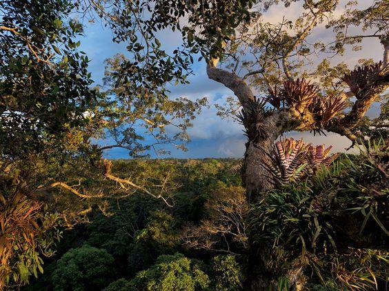 Yasuni National Park, EcuadorPhoto: Steve Winter