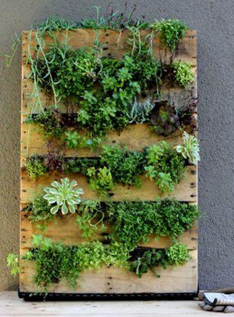 mur-vegetal-etapes-fabrication-conseils-palette-bois