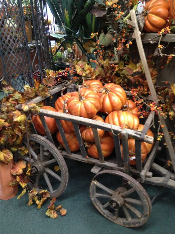 Goat cart full of pumpkins at Ramah's: