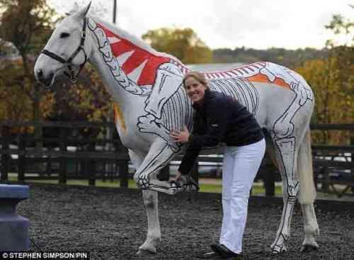 equine anatomy demo--good idea