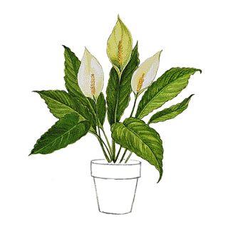 Magia das Plantas: Cuidados com Plantas