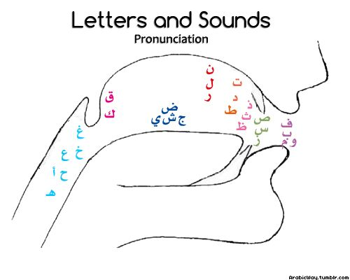arabicway:    This drawing shows where the sounds should come out from when you…