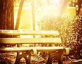 Wooden bench in the sun's rays