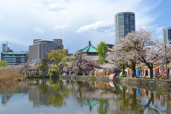 Sakura : le cerisier en fleur annonce l'arrivée du printemps | nippon.com - Infos Japon