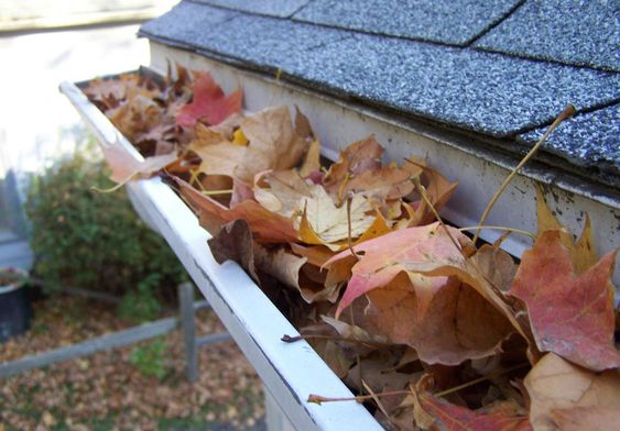 Gutters filled with leaves and debris