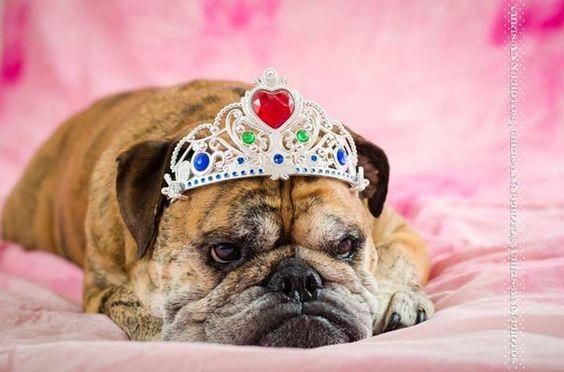 Baggy Bulldogs~ diva princess