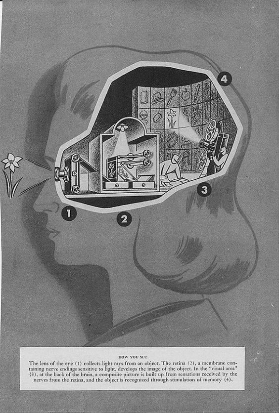 vintage medical book illustration - vision: