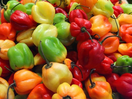 Photo of Hot Scotch Bonnet Peppers