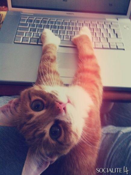 "Hehe ""can you not read over my shoulder pleaseeee"":"