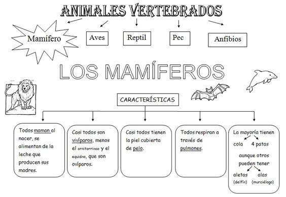 Dibujos de animales vertebrados e invertebrados para