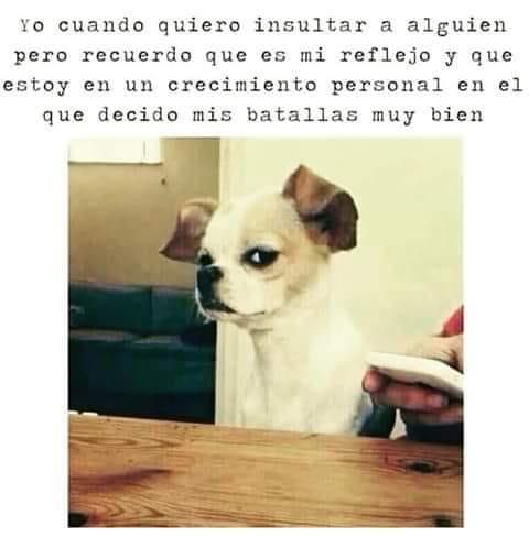 Pin By Brandy Aguirre On Positivo Funny Animal Jokes Funny Instagram Memes Very Funny Photos