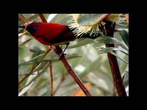 Red Vented Bulbul Location Jimcorbett India Beautiful Birds Most Beautiful Birds Animals Beautiful