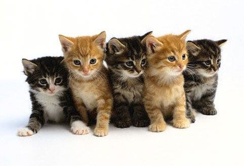 Cute Baby Kittens | This page is for pictures of baby kittens. How cute!!!!: