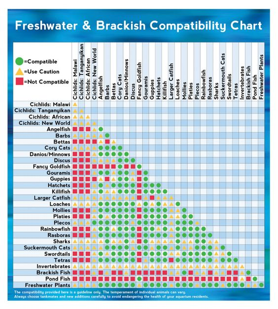 Freshwater \ Brackish Fish Compatibility Chart Infographic Snipe - compatibility charts