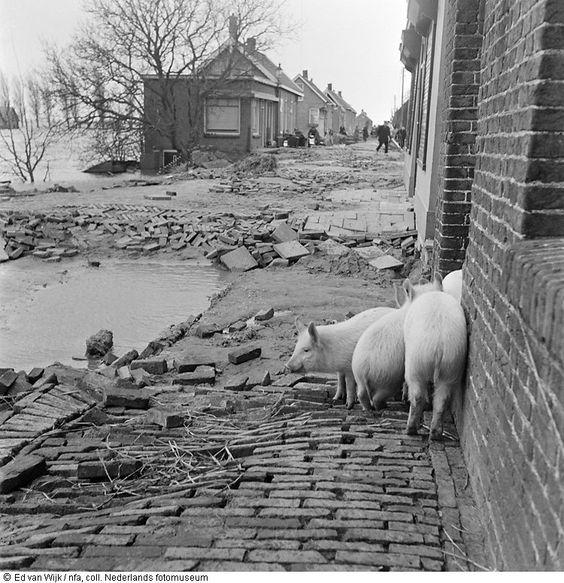 zeeland 1953 | foto: ed van der elsken: