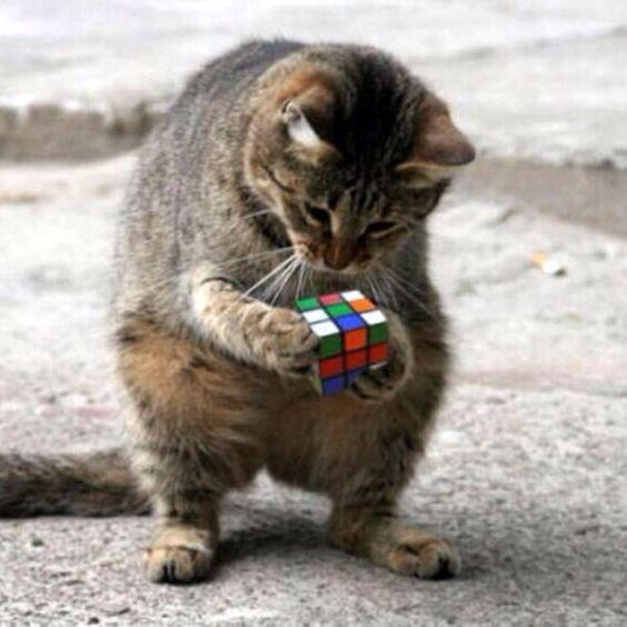 ルービックキューブをとく変なポーズの猫