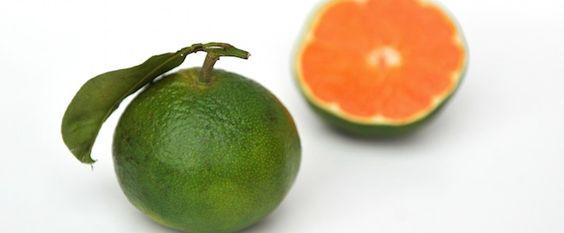 Grüne Klementine