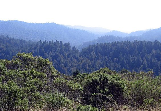 View of the redwoods