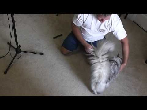 How To Remove Cat Fur Mats This Is How To Remove Matted