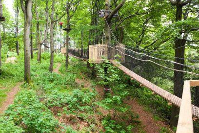 Die 13 schönsten Baumwipfelpfade Deutschlands