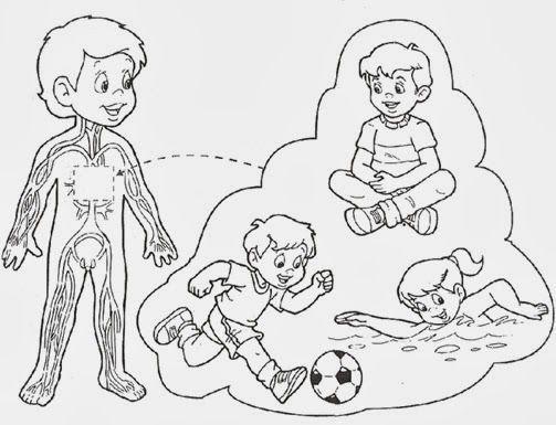 El aparato circulatorio para niños para colorear Imagui