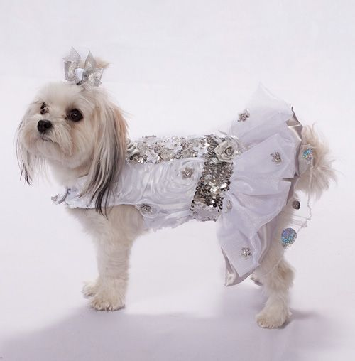 Dog Wedding Dress Dog Wedding And Dog Dresses On Pinterest