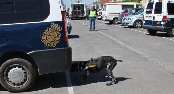 Cuerpo Nacional Policia - Guías Caninos.   Visita Benedicto XVI a España, Santiago de Compostela