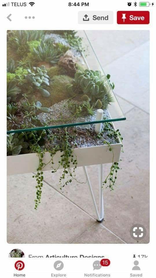 This Succulent Table Indoor Garden Plants Hanging Plants