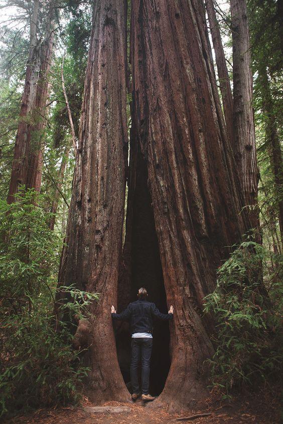 Northern California Honeymoon — a Better Happier St. Sebastian