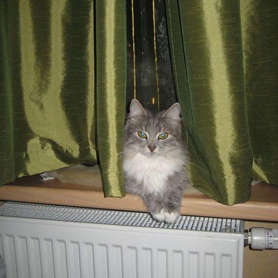 #cats #cats_for_ads #cat #catlover #ilovemycat #instacat #petstagram #pet #pets #animals #animal #kitty #kitten