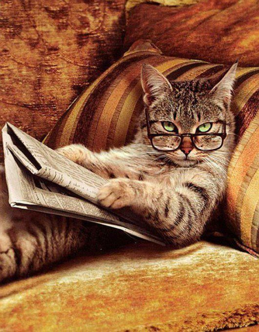 This cat looks like my boyfriend when he is reading!
