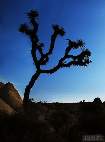 Joshua Tree National Park - One of my favorite places!!!