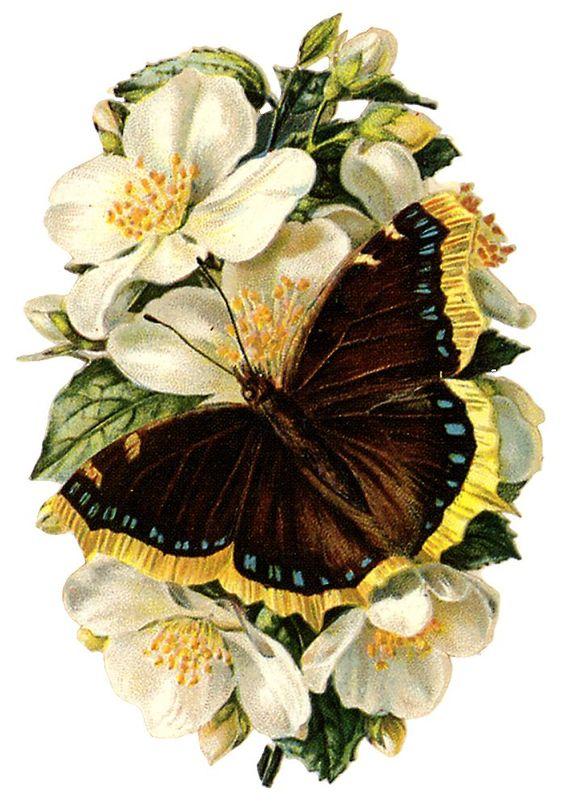 Monarch butterfly on flowers clip art