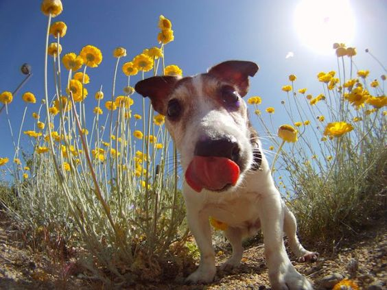 GoPro - fotografija dana