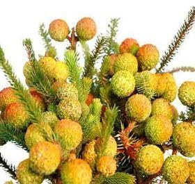berzillia berries...: Orange, Favorite Flowers, Floral Vendors, Plants Trees, Flowers Wedding, Flowers Plants, Plan Weddings, Flowers Foliage