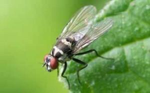 Fabricando un mata moscas casero podrás conseguir que estos insectos dejen de molestarte durante tus comidas, cenas o actividades al aire libre. Pero, en esta o