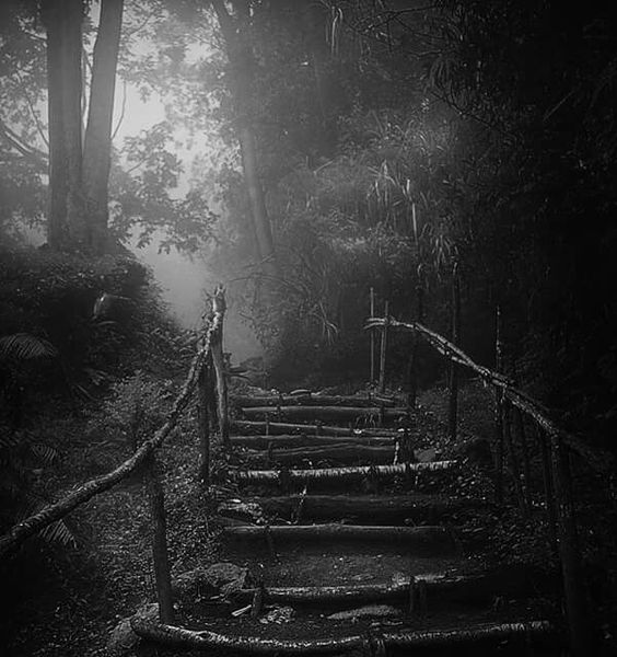 Reza Wahidy : Inland Forest.