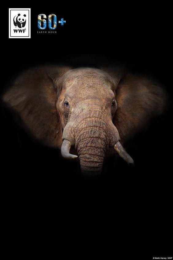 Wusstet ihr, dass der Afrikanische Elefant schon bald verdursten könnte? Eine von sechs Tierarten ist schon jetzt durch den Klimawandel vom Aussterben bedroht. Macht mit bei der #EarthHour und setzt ein Zeichen für mehr Klimaschutz und Artenschutz: www.wwf.de/earthhour