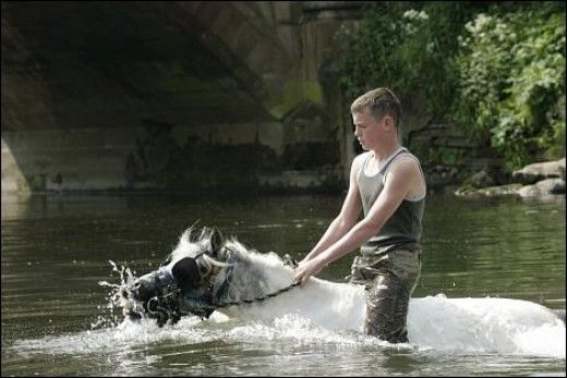 Gypsy lad bathing his horse at Appleby