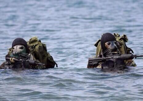 Seals fight back! #sharkweek