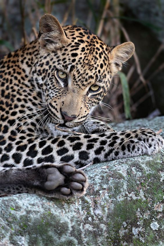 Motswari Private Game Reserve South Africa Photo by Keith Connelly https://www.facebook.com/pages/Keith-Connelly-Photography/119507356354?fref=photo