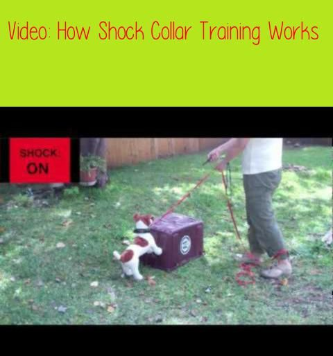 How Shock Collar Training Worksthis Is An Educational Video That
