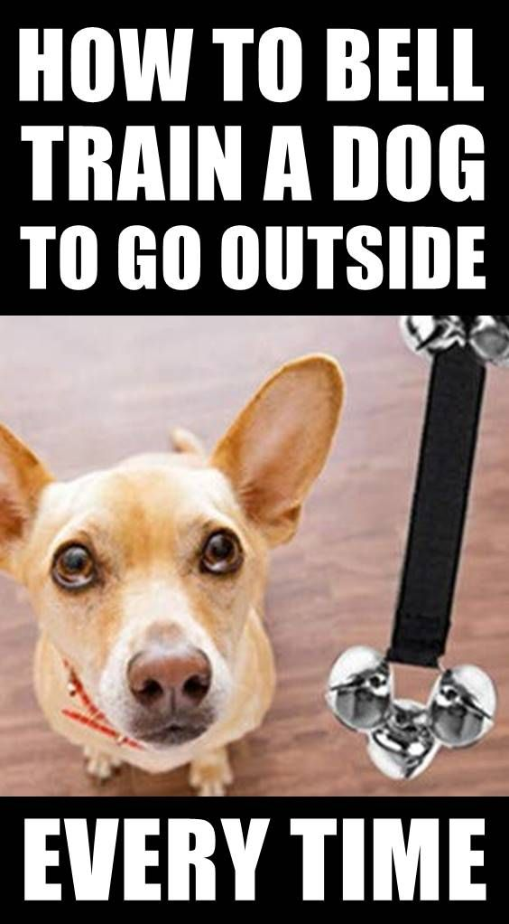 How To Get Dog To Go To The Bathroom Outside