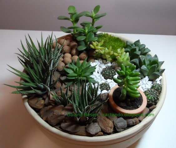 mini jardim cactos suculentas:Google and Minis on Pinterest