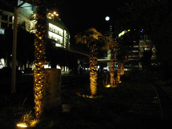 Palmen auf der Berliner Allee